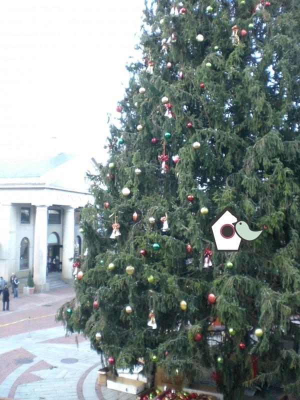 Weihnachtsbaum_Boston