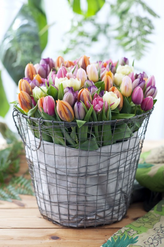 BBH Tulpen im Korb