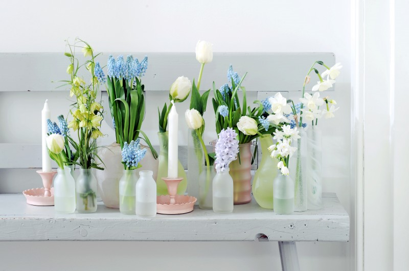 BBH Zwiebelpflanzen in Vasen